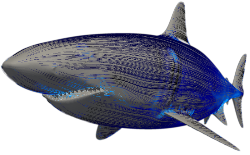Shark (CFD simulation with OpenFOAM)